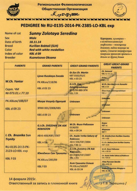 Sunny-1-scaled